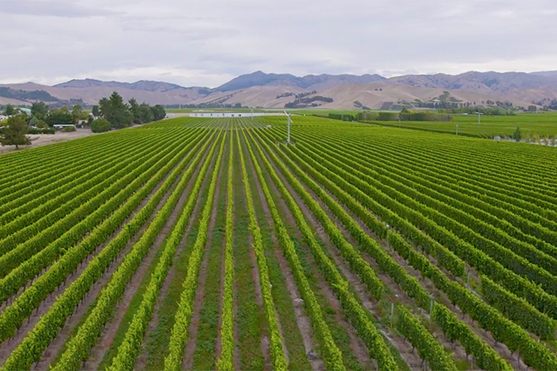 Luxury Escapes - New Zealand Tours Marlborough Vineyards